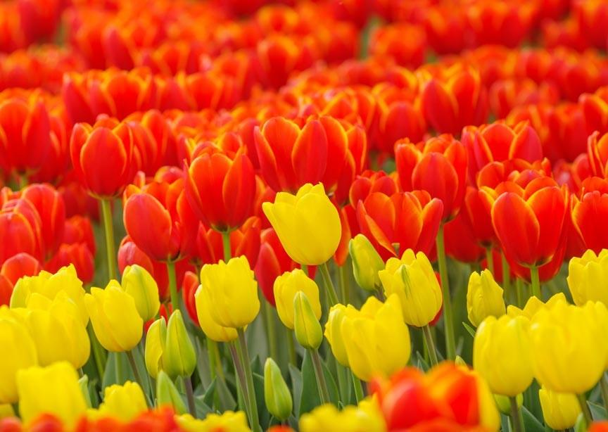 Biltmore Blooms 2018 Festival of Flowers at Asheville's Biltmore Estate